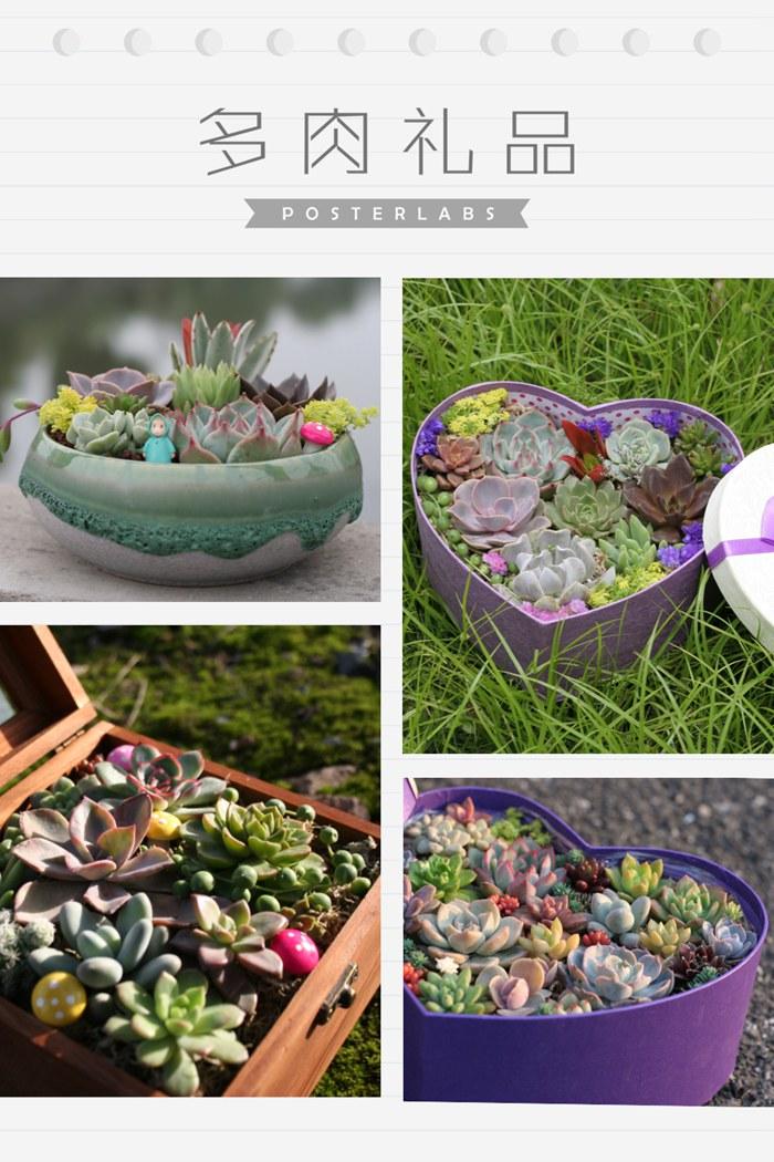 岁草<a href=http://suicao.com/life/ target=_blank class=infotextkey>多肉植物</a>花园 (7).JPG