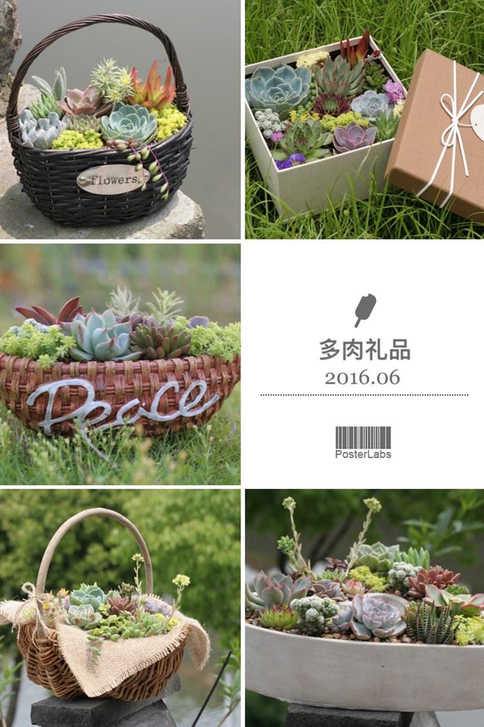 岁草<a href=http://suicao.com/life/ target=_blank class=infotextkey>多肉植物</a>花园 (9).JPG