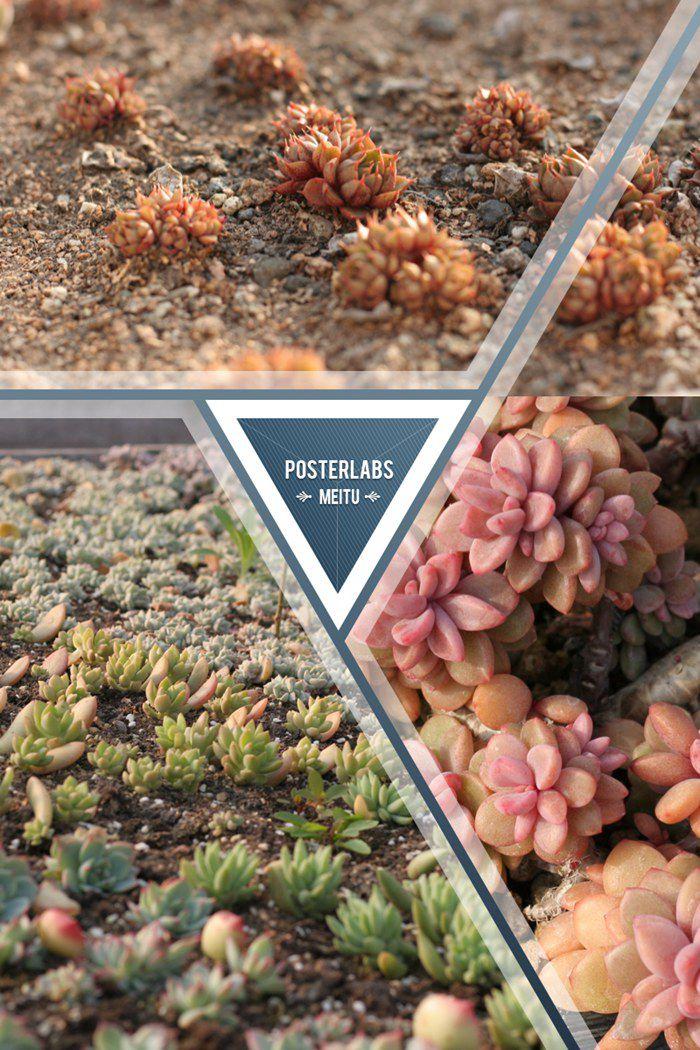 岁草<a href=http://suicao.com/life/ target=_blank class=infotextkey>多肉植物</a>花园 (1).JPG