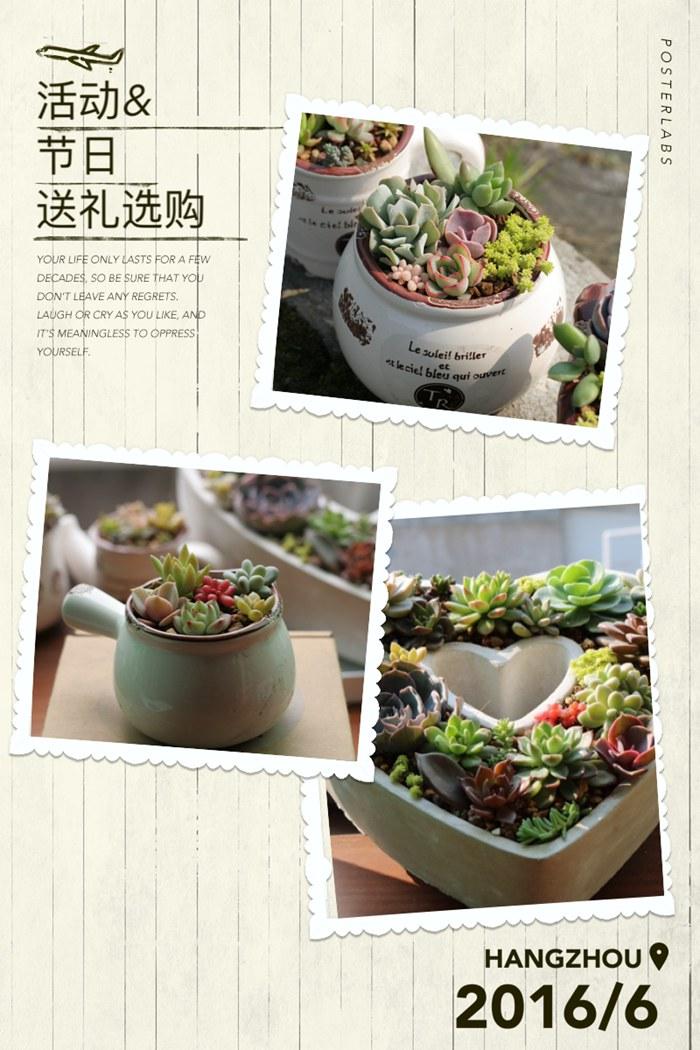 岁草<a href=http://suicao.com/life/ target=_blank class=infotextkey>多肉植物</a>花园 (6).JPG